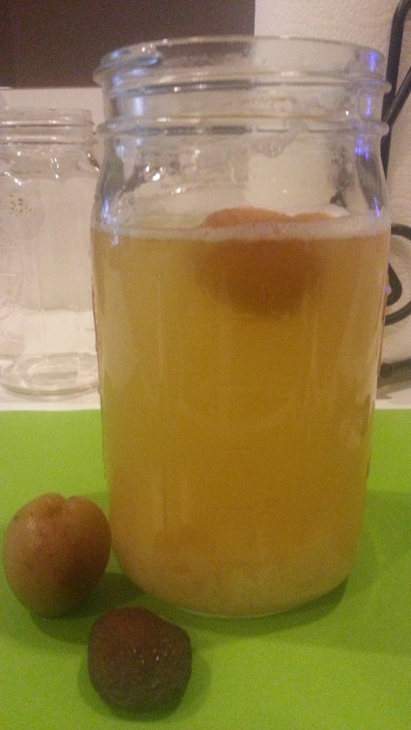 Water Kefir with Apricots.
